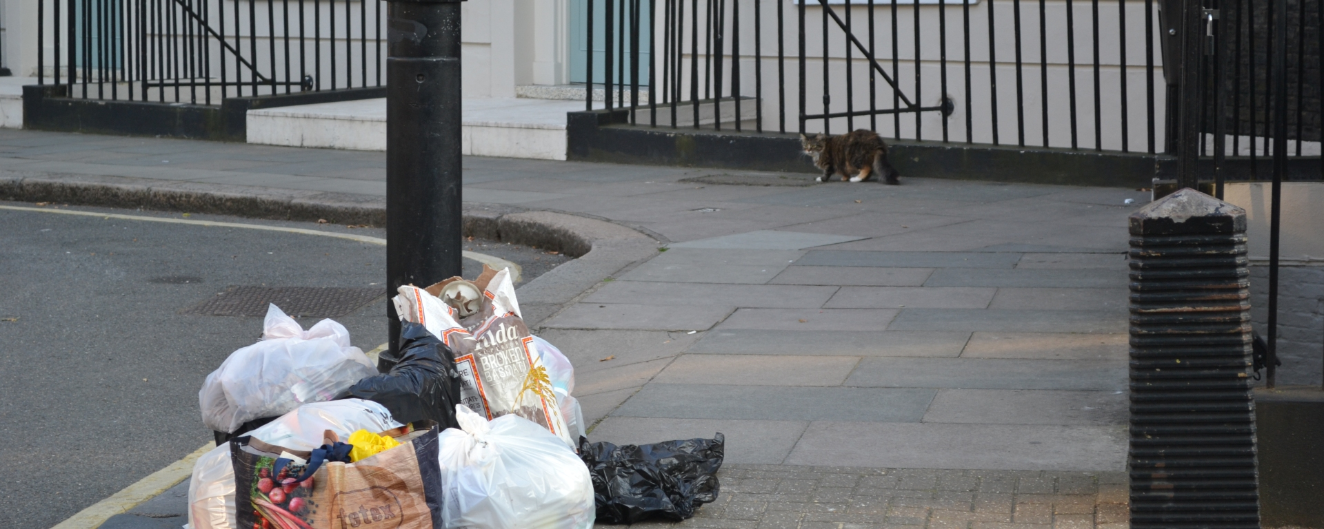 Pile of bin bags with a cat in the background, Argyle Street, Bloomsbury, Camden